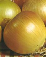 Onion 'Rijnsburger 5' - 200 or 1000 seeds